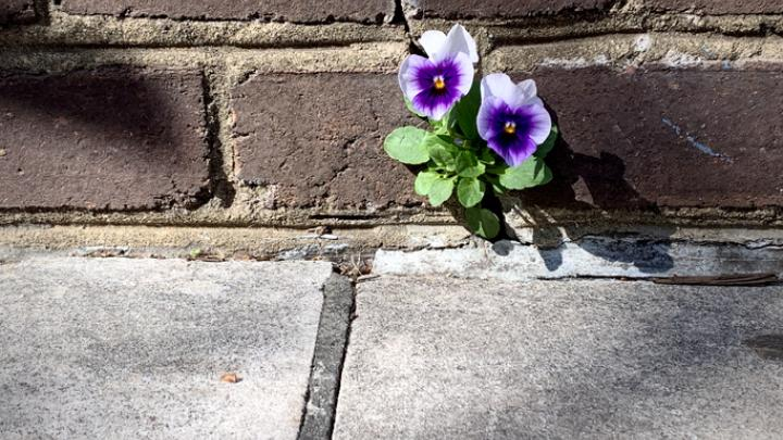 having resolve flower growing through brick